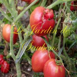 German red Strawberry (Copier)