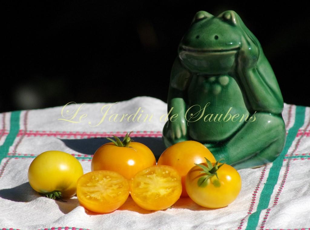 Lemon Bush