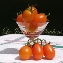 Orange Berry