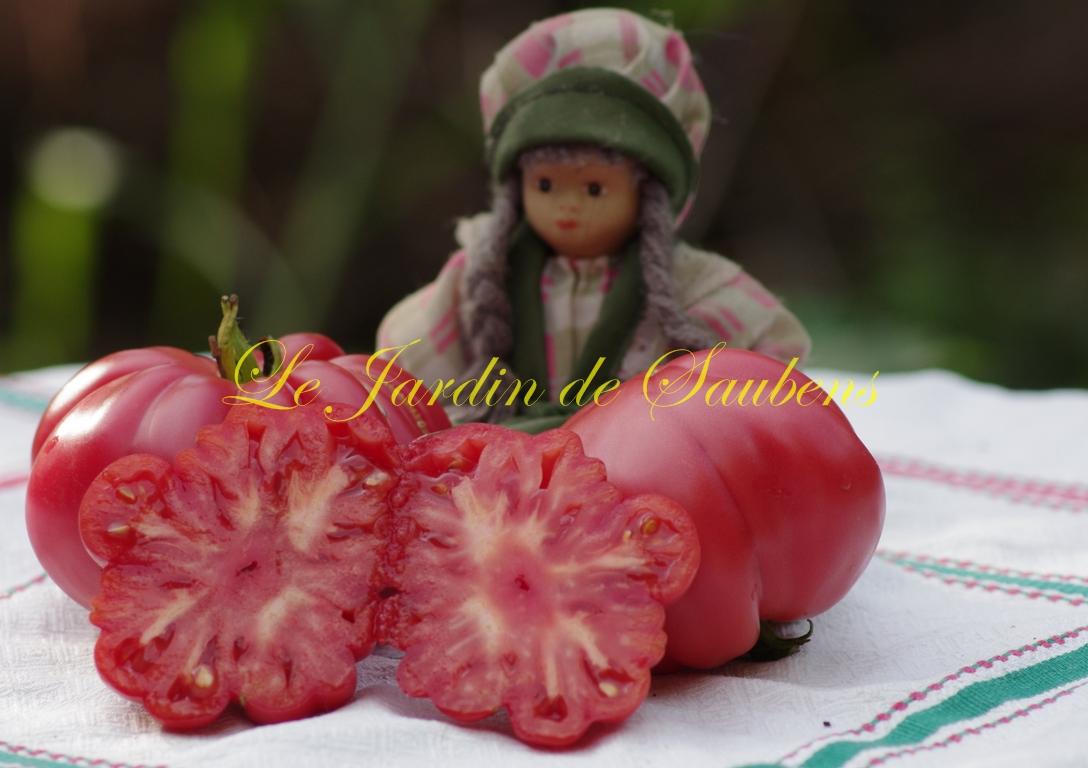 Pink zapotec
