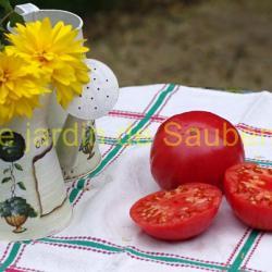 Sandul Moldovan