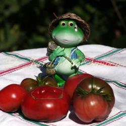 Strawberry Margarita Bicolor