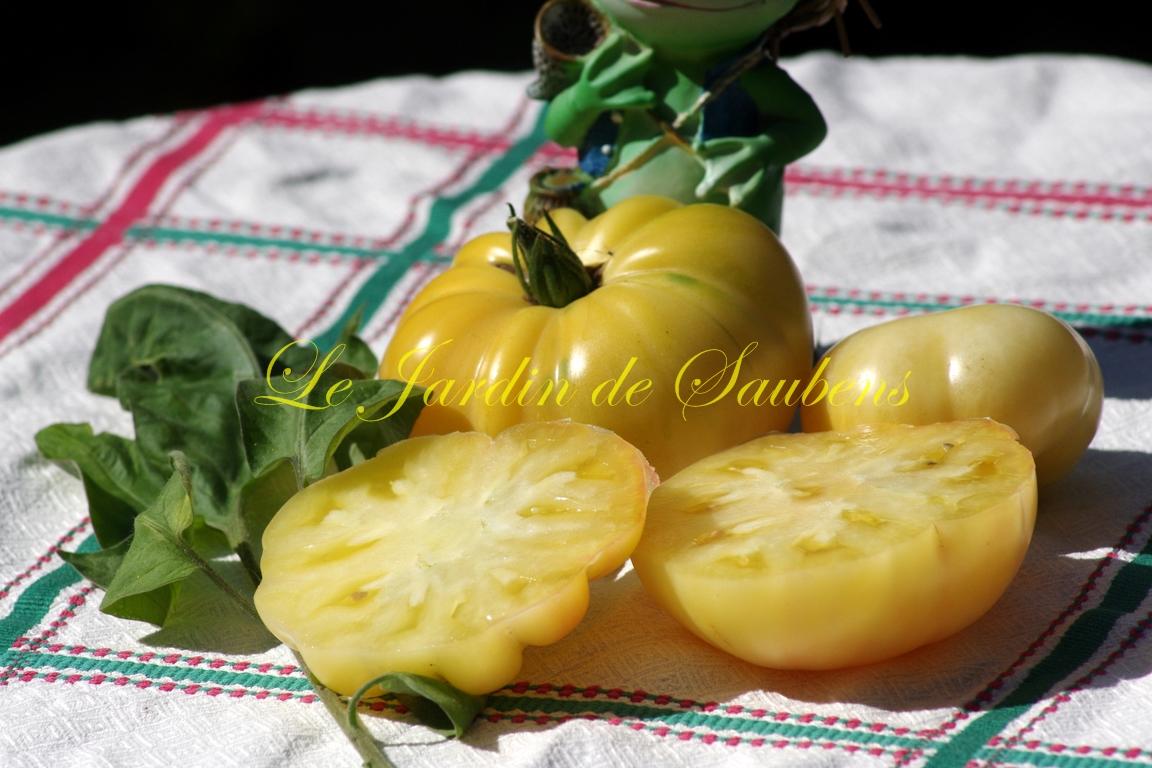 White potato leaf