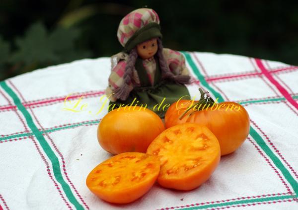 amana-orange-2-copier.jpg