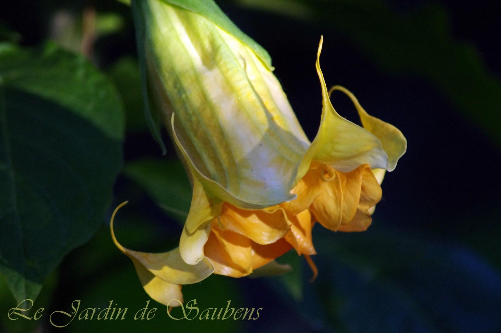 Ds fleur de sommeville 2