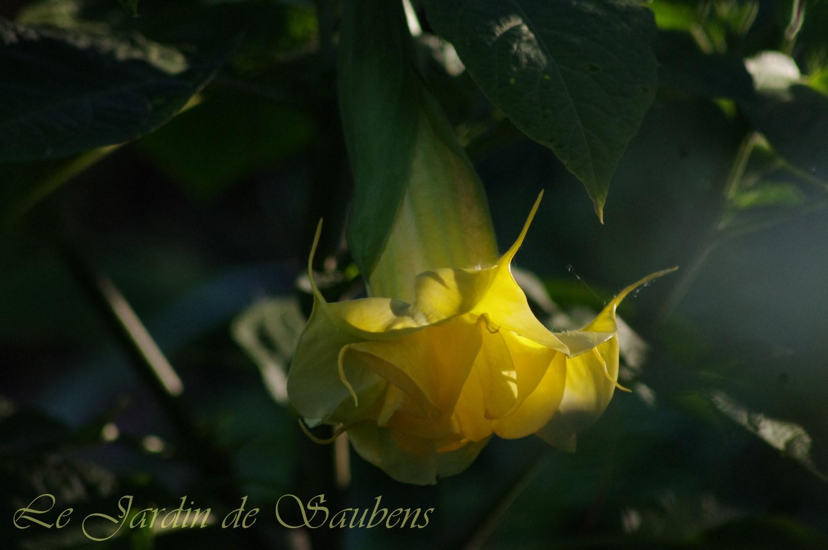 Ds fleur de sommeville 9