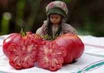 pink-zapotec-6-copier.jpg