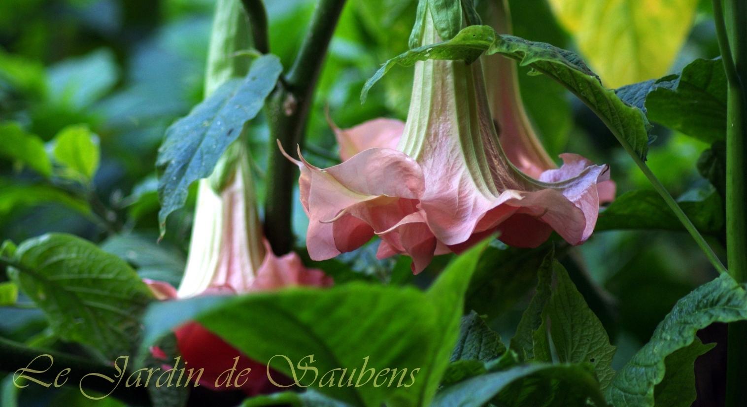 SB Tutu Rose