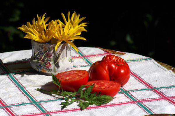 Sicilian saucer 1